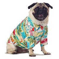 Hawaiian Pug